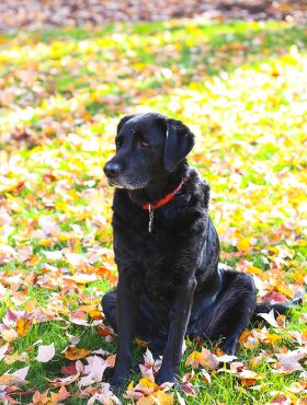 close up image of Jessie sitting in leaves
