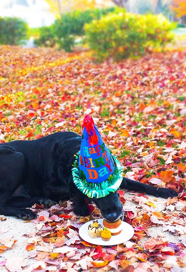 Jessie turns 6!